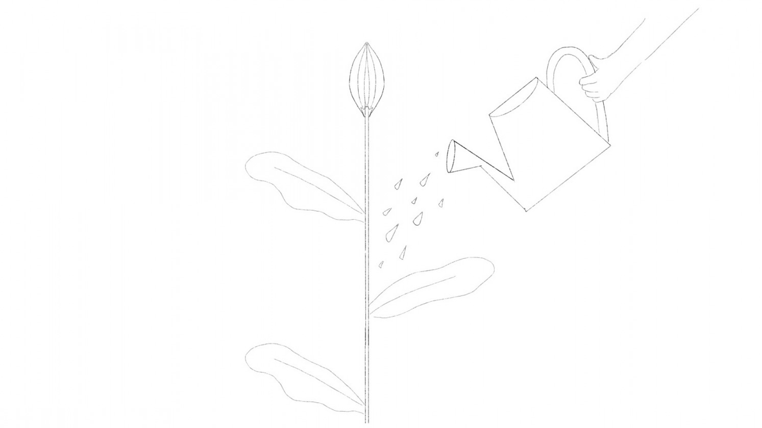 Illustration from Together Trust Storyboard of flower being watered